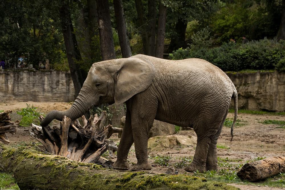 U slonic prohlídka s průvodkyní končila.